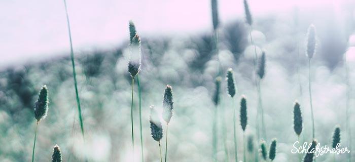 Nackenkissen für Allergiker